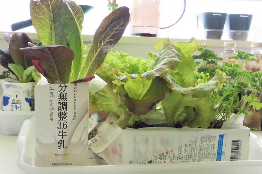 牛乳パックプランターで家庭菜園【写真:Hint-Pot編集部】