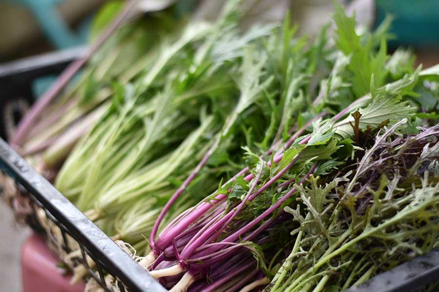 寒くなるほどおいしい葉物野菜【写真:鈴木智哉】
