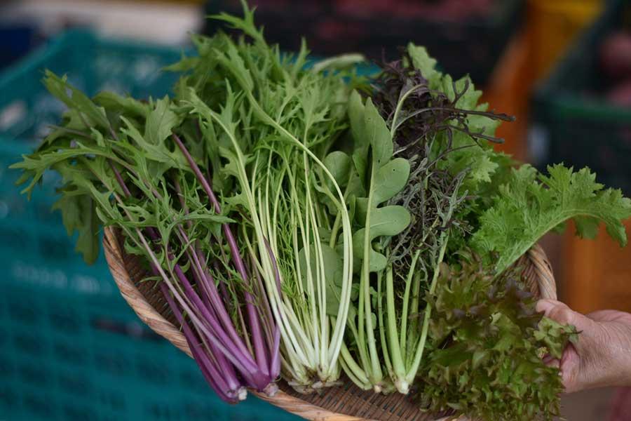 葉物野菜は鮮度が命 ピンとしたものを選ぼう【写真:鈴木智哉】