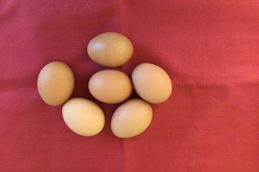 卵1個だけの調理に電子レンジは超便利【写真:Hint-Pot編集部】