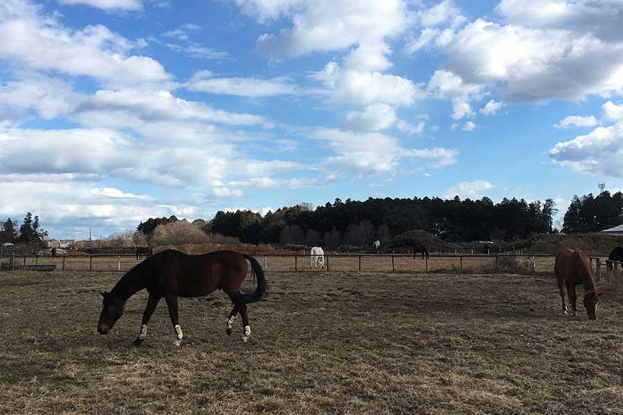 近所にある乗馬クラブ。敷地横にある広場で馬が放牧されている【写真:こばやしなつみ】