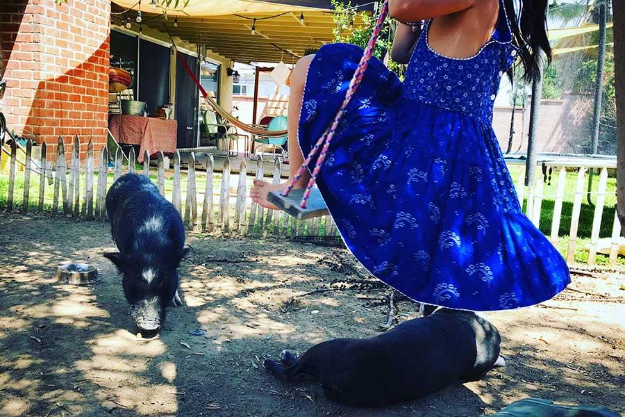 バックヤードにて。家族である犬のトウフは肉食系、豚のスイは草食系【写真:小田島勢子】
