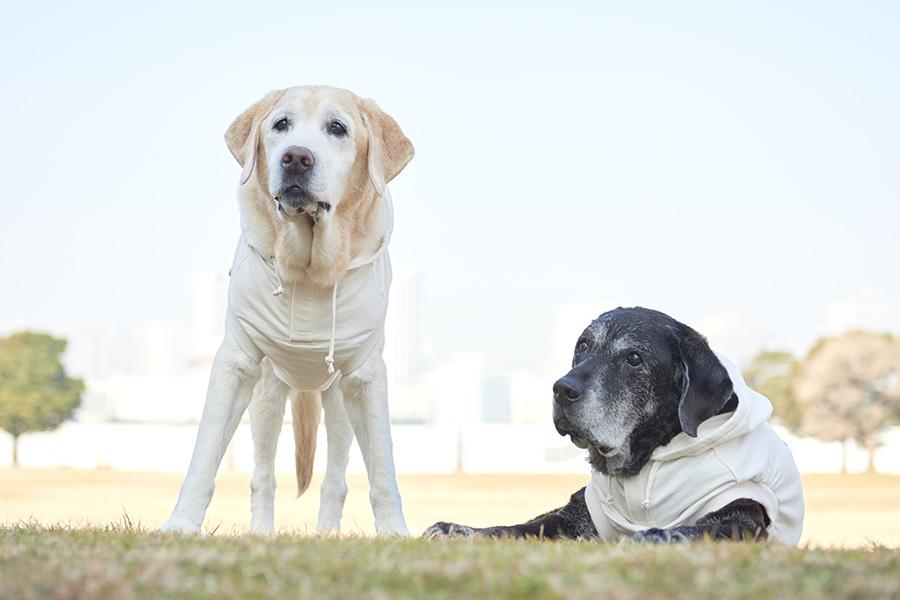 特に大型犬の老犬は移動が大変。脱出ルートの確保が大切である【写真:Hint-Pot編集部】