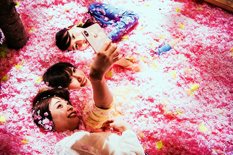 SAKURA CHILL BAR by佐賀にある120万枚の花びらを使用したプール【写真提供:「SAKURA CHILL BAR by 佐賀」 PR事務局】