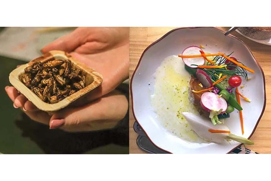ポップアップショップで振舞った料理。左はウケの良かったイナゴの佃煮【写真提供:minori】