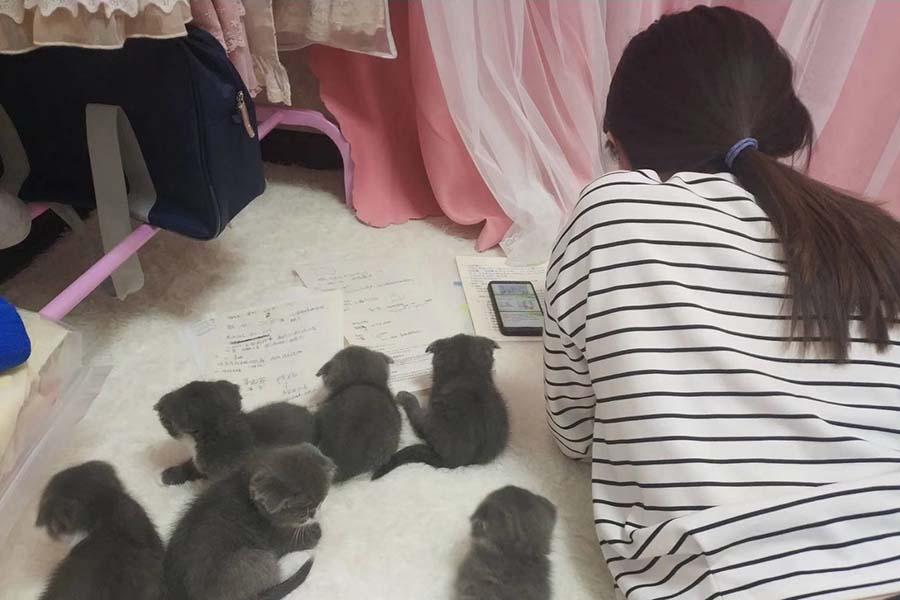 グレーのかわいい子猫達に囲まれる妹さん【写真提供:nagisa(@nagisa9008)さん】