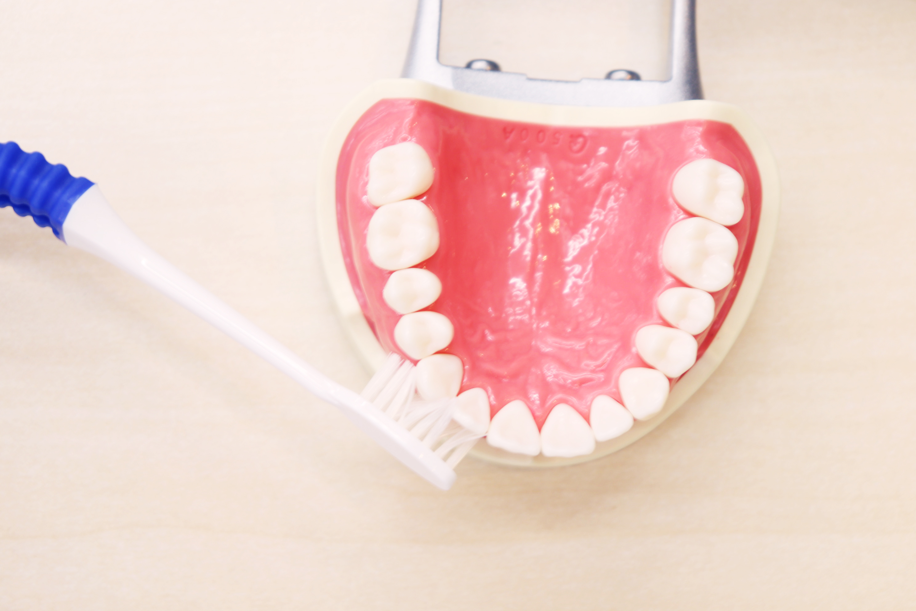 強く磨くと虫歯や知覚過敏の原因にも…【写真:Hint-Pot編集部】