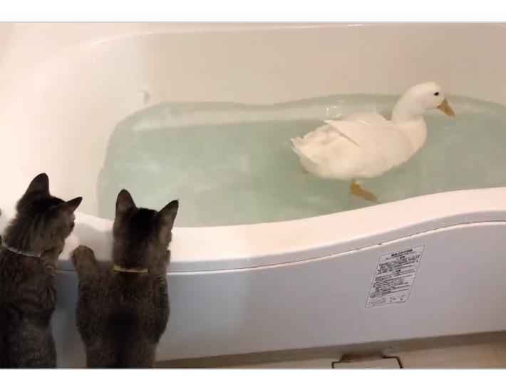 浴槽で水浴び中のおまるくんと、それをのぞくステテコくんとモモヒキくん【写真提供:「アヒルのおまる」 (@ahiruomaruchan)さん】