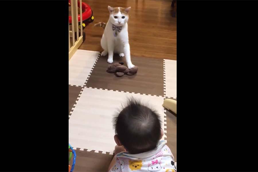 3歳の元保護ねこ「むぎ」くんと、飼い主さんの娘さんの攻防戦のスクリーンショット【写真提供:むぎ(@mugi411)さん】
