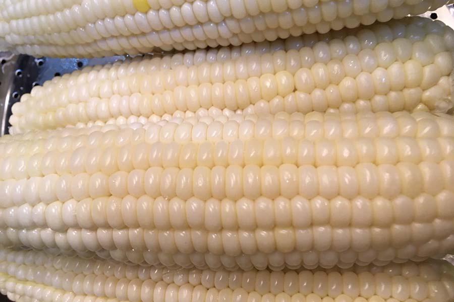 トウモロコシはぎっしりと粒が並んでいるもの【写真:こばやしなつみ】
