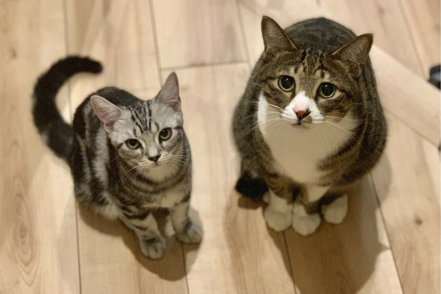 末っ子の「もぐ」くん(左)と次男坊の「どんちゃん」くん【画像提供:ななおっさん(@nanao_ssan)さん】