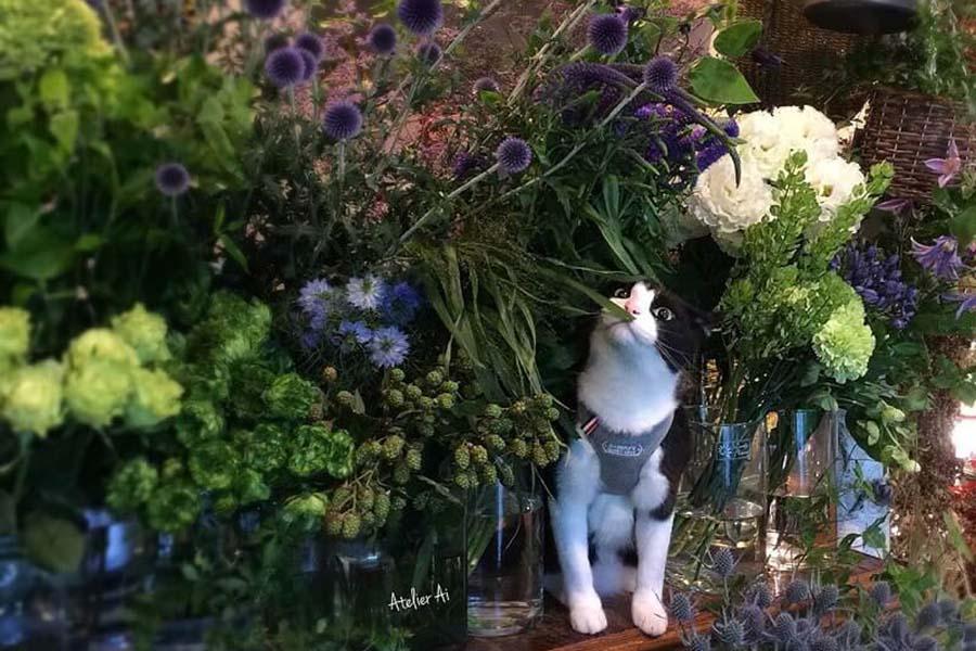 「Atelier Ai(アトリエアイ)」の看板ねこ「キャスパー」。花があふれる店内にひっそりと【写真:猫ねこ部】