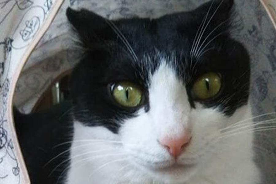 元保護ねこの猫山さん【写真:猫ねこ部】