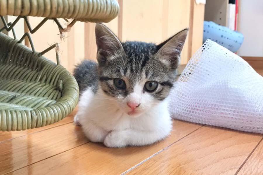 「おむつ(仮)」くん【写真提供:おこめさんとねこ塩家にゃんず。(@naclcats4)さん】