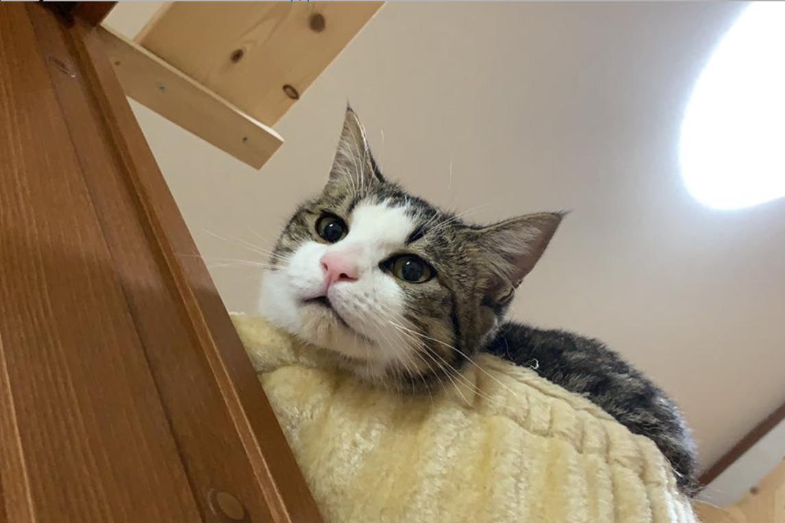 生後10か月の「オデコ」ちゃん【写真提供:ひのき猫(@nekohinoki)さん】
