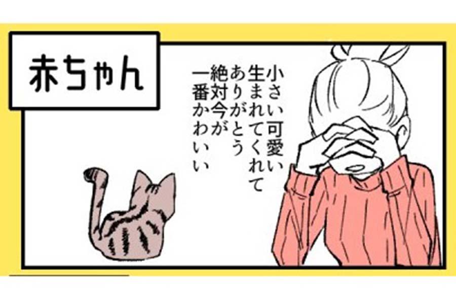 愛猫・殿くんの成長を描いたなごさんのイラスト【画像提供:なご(@ikng_0)さん】