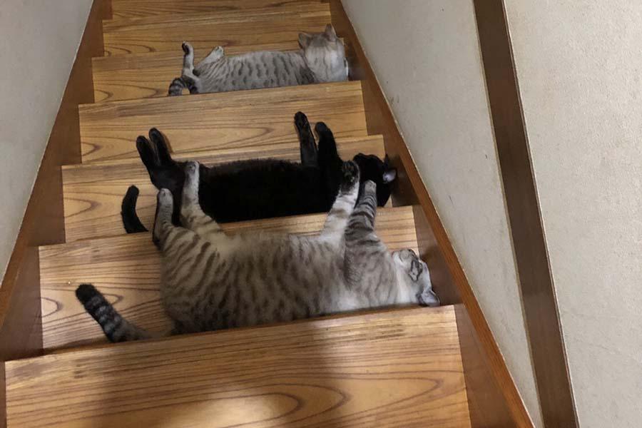 通せんぼするねこ達 手前から琥珀くん、黒桜ちゃん、一番下の右近くん【写真提供:猫奴隷さん(@nekodorei47)】