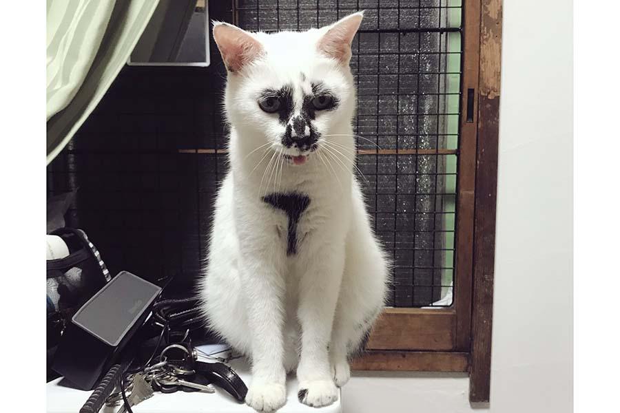 貫禄たっぷり! 元保護ねこのミチルちゃん【写真提供:熱海 Muddy Catさん(@muddycat_atami)】
