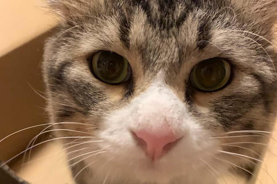 元保護ねこの「温」くん【写真:猫ねこ部】