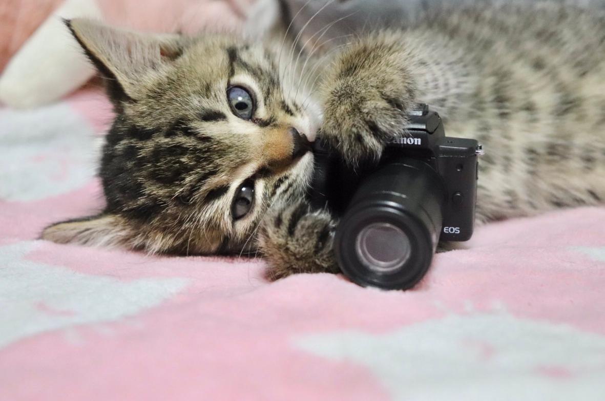 カメラを構える生後1か月の子ねこ「エル」ちゃん【画像提供:the mi(@oken_ne)さん】