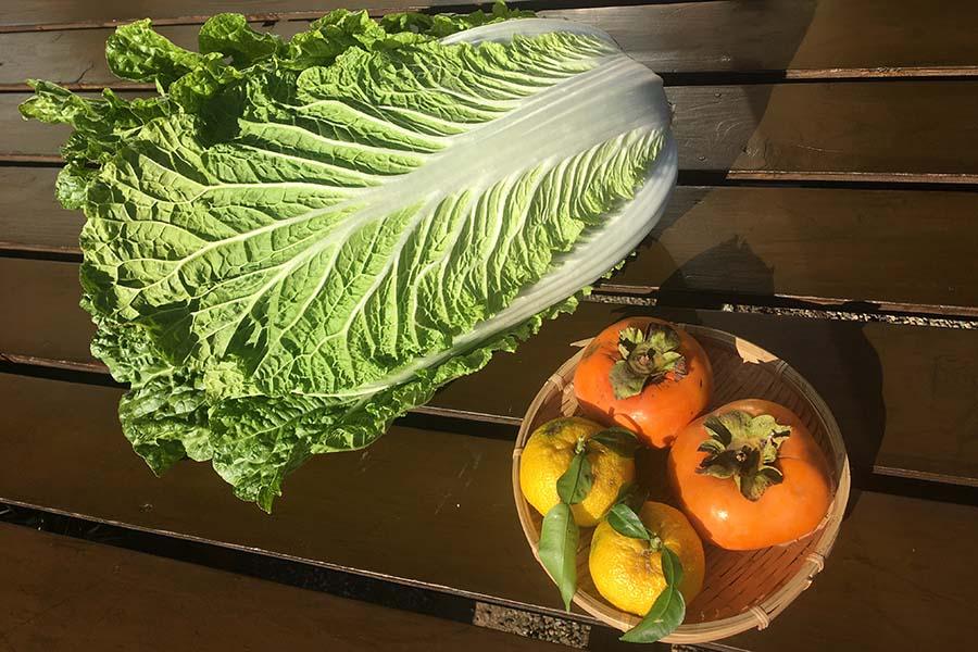 新鮮な白菜、柿、柚子【写真:こばやしなつみ】