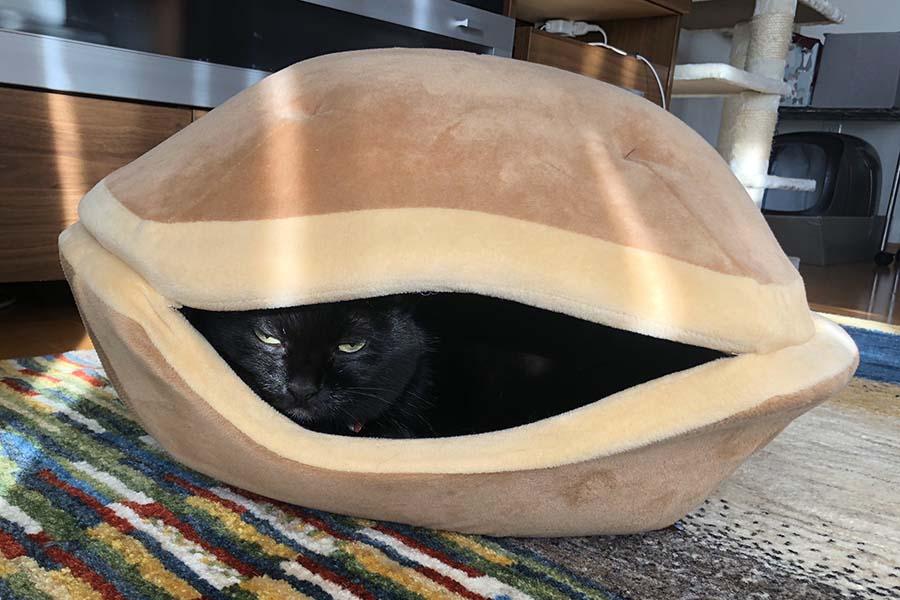 どら焼き型ベッドから顔を覗かせる黒ねこの「ヨーコ」ちゃん【写真:だいず(@D_isoflavone)さん】