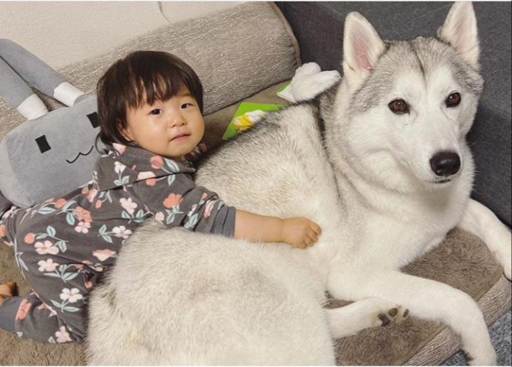 1歳4か月の「しの」ちゃんと、3歳のシベリアンハスキー「ロキ」くん【写真提供: LOKI*NICO(loki_._nico)さん】