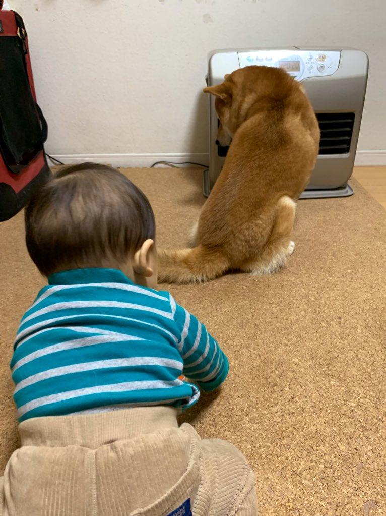 """5歳の柴犬の男の子「小太郎」くんと""""弟分""""【写真提供:こたろうくん(@kotaro_chang)さん】"""