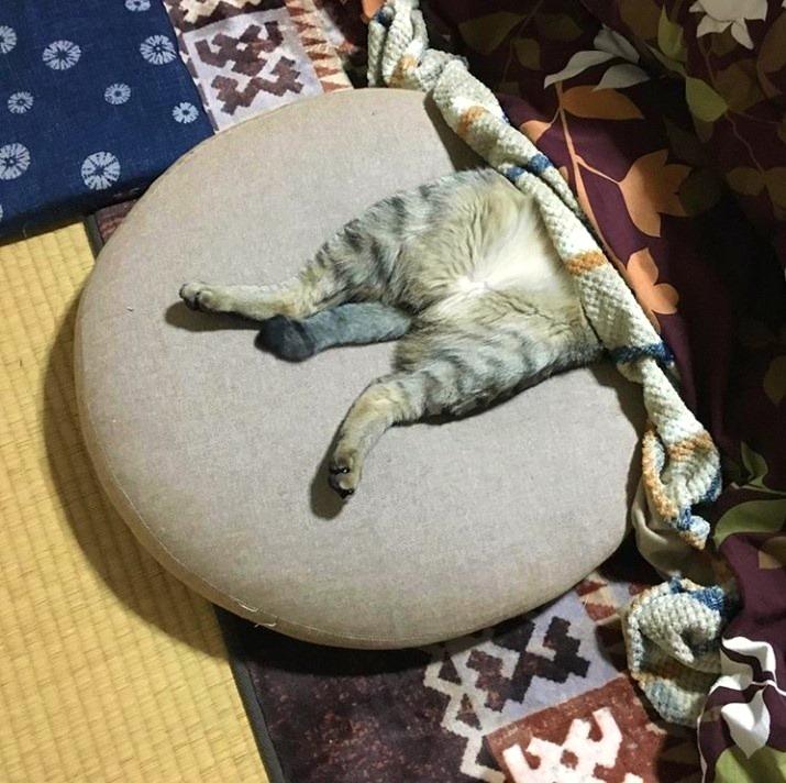 無防備な姿で寝る「こんぶ」くん【写真提供:タル巻チョロ助(taruchoro)さん】