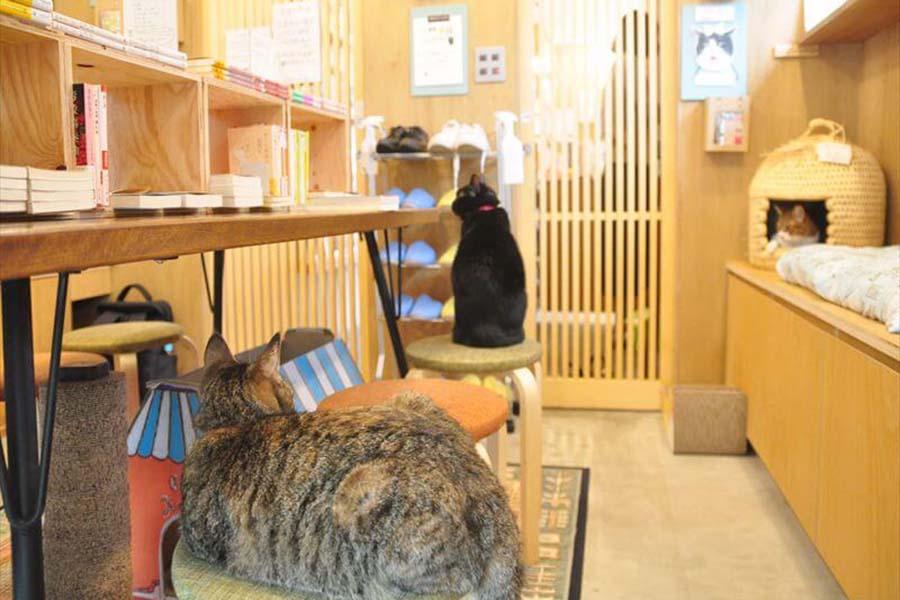 この思い思いな距離感が心地いい。ねこ本専門店「キャッツミャウブックス」店内【写真:猫ねこ部】