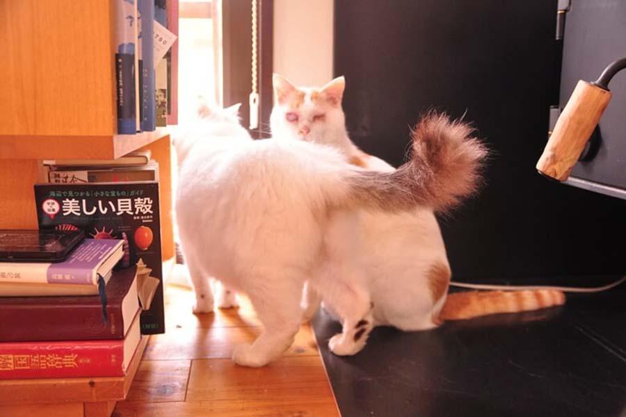 左が「ルカ」くん、右が「ラク」くん【写真:猫ねこ部】