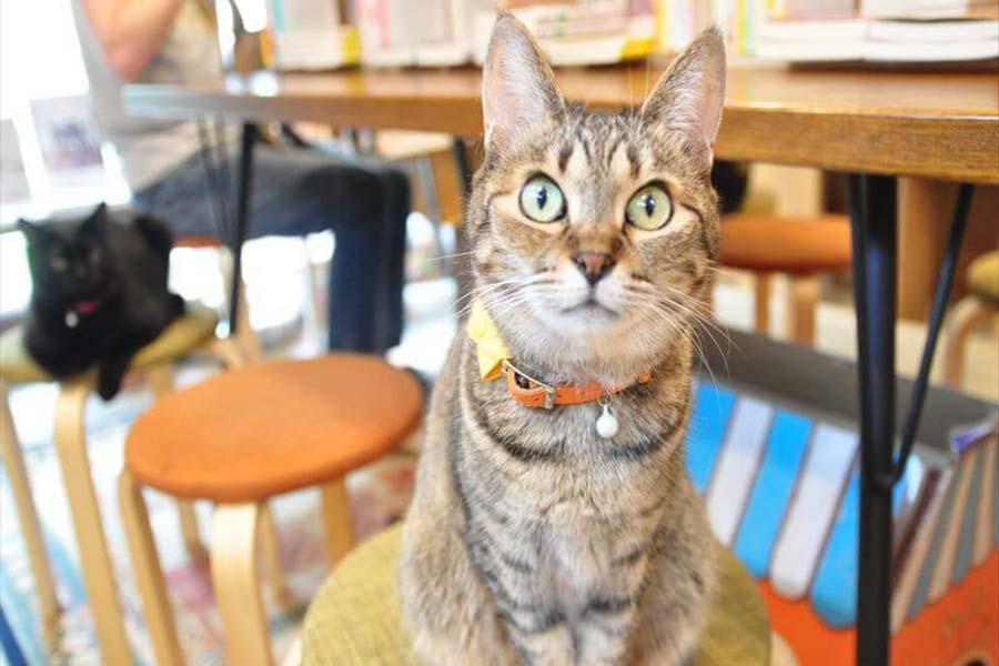 「キャッツミャウブックス」のねこ店員「すず」ちゃん【写真:猫ねこ部】