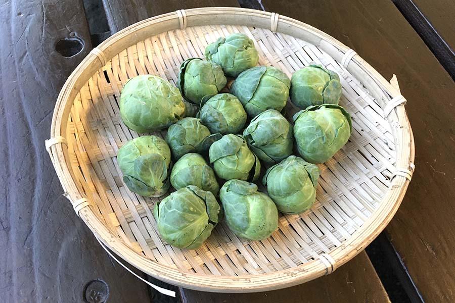 冬が旬 甘みを蓄えた栄養たっぷりの芽キャベツ【写真:こばやしなつみ】