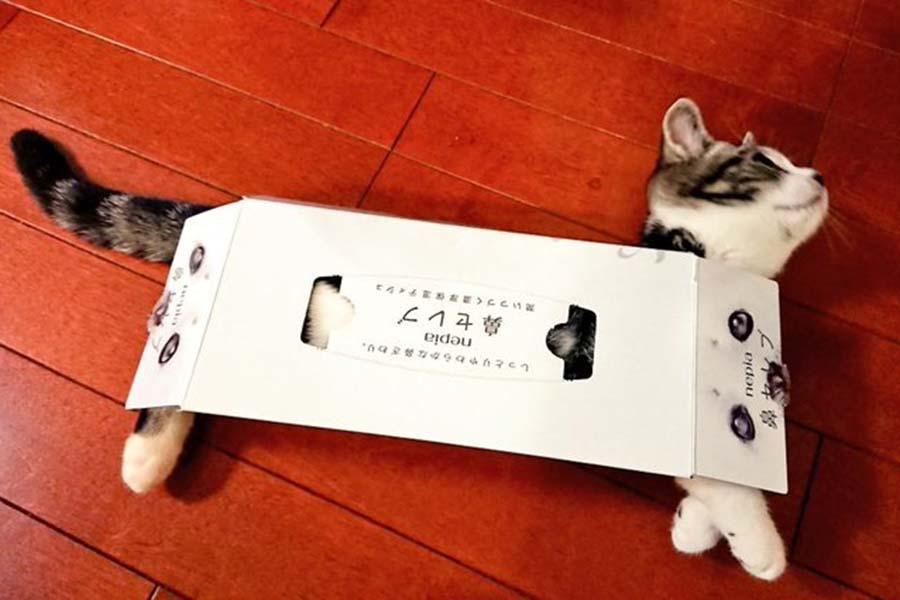 「猫バス」へと変身した「ポッキー」くん【写真:ちひろ(@chihiro_gs)さん】