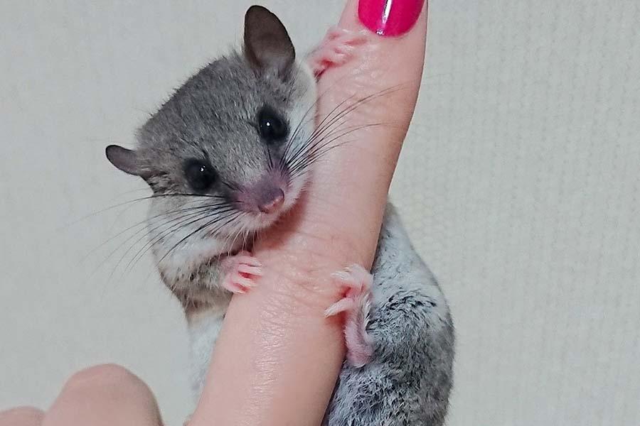 な つく 小動物 【元動物園の飼育員が解説】一人暮らしでも飼いやすい小動物20種類