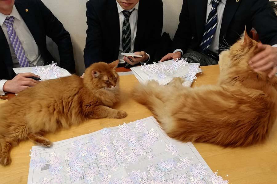 打ち合わせに参加する「ツナ」ちゃん(左)と「ライ」くん(右)【写真提供:やしゅう(@FakeYashu)さん】