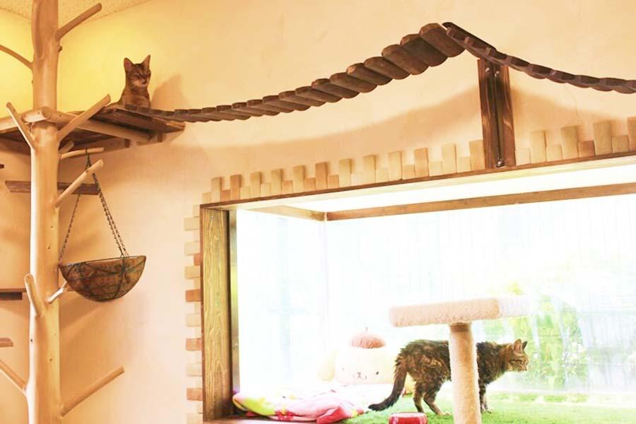 こちらは帝さんお手製のキャットウォーク【写真:猫ねこ部】
