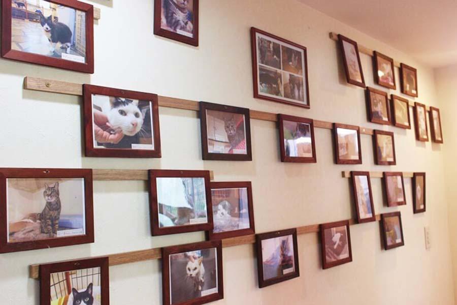 壁には、飼育するねこ達の写真が数多く飾られている【写真:猫ねこ部】