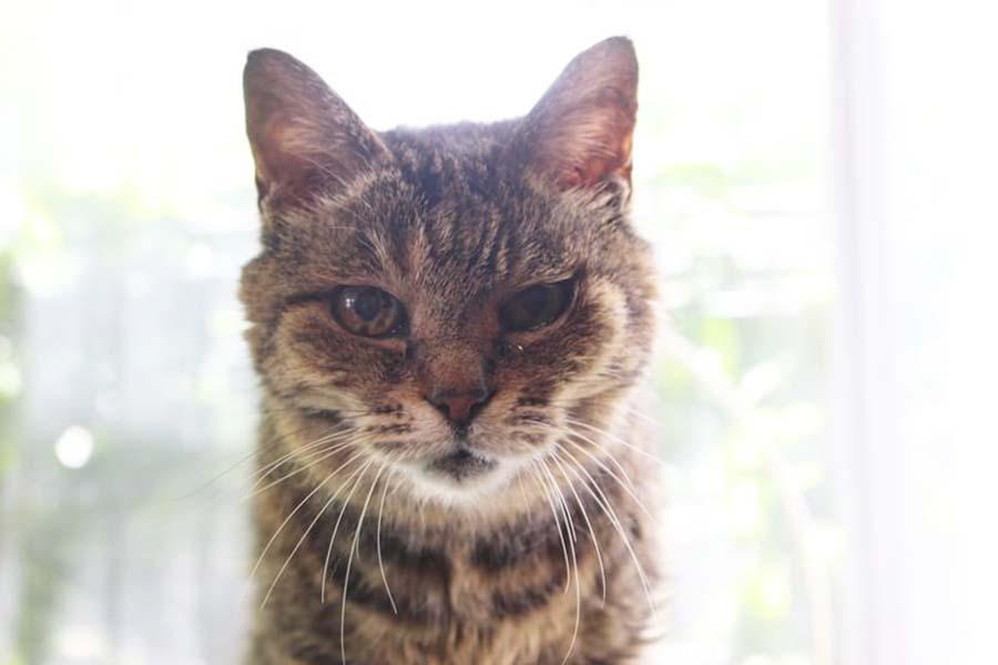 「東京ペットホーム」に預けられたねこ。カメラ目線で【写真:猫ねこ部】
