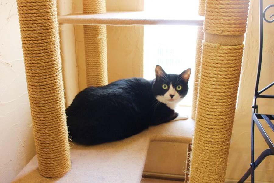 「東京ペットホーム」で暮らすねこ。日向ぼっこ中【写真:猫ねこ部】