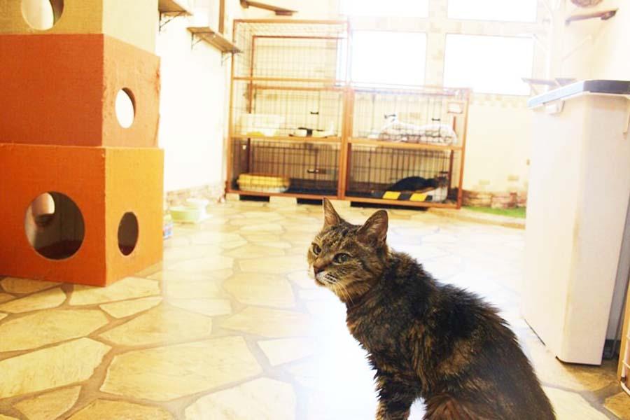 「東京ペットホーム」に預けられたねこ【写真:猫ねこ部】