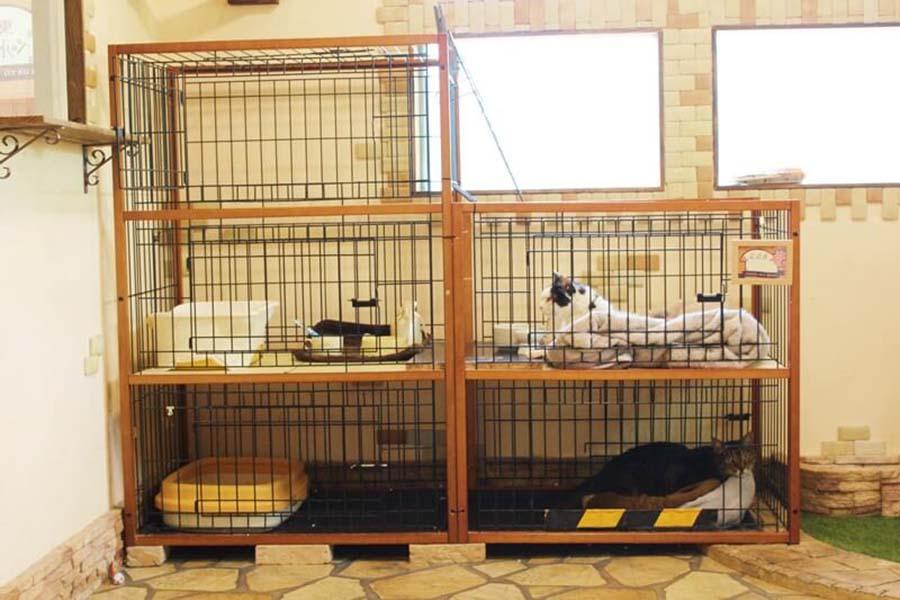 共有スペースとは別に個々のお部屋があり、個別管理【写真:猫ねこ部】