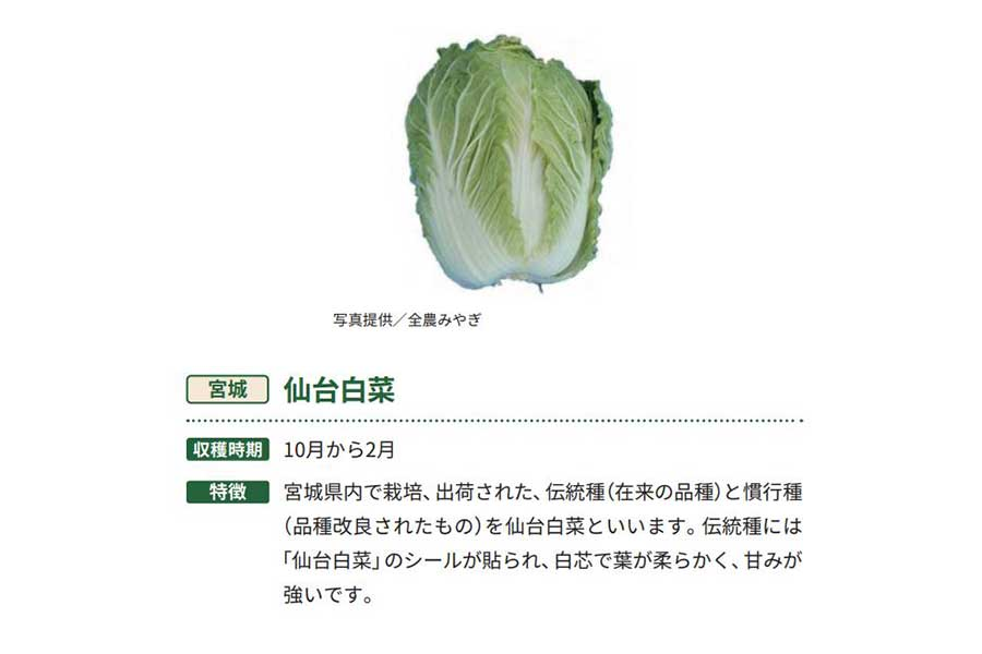 仙台白菜【出典:農林水産省「冬野菜」より作成】