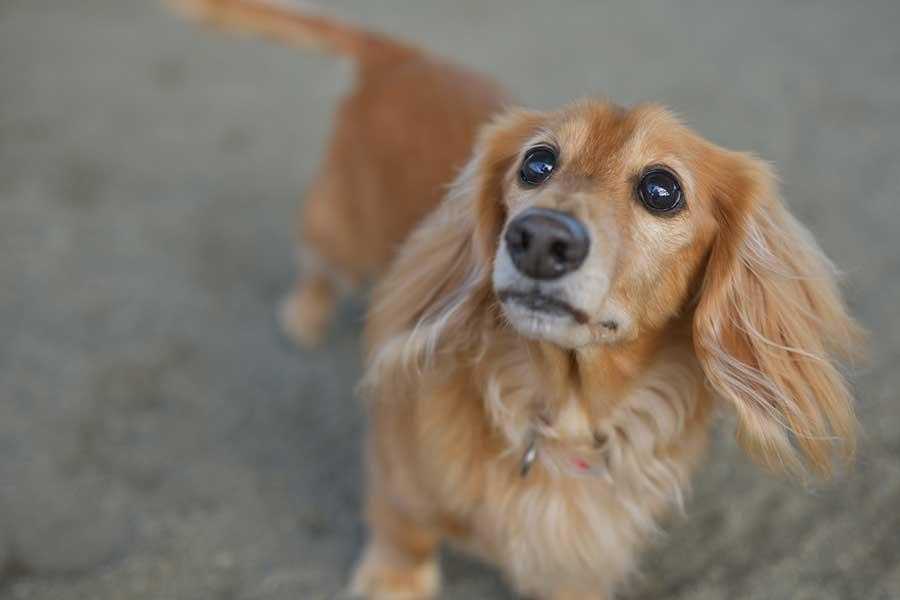 大切な家族の一員だからこそ、愛犬の健康状態には注意したい(写真はイメージ)【写真:写真AC】