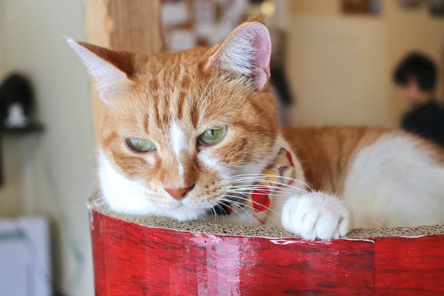 イベント開催中も思い思いに過ごす猫達【写真:Hint-Pot編集部】