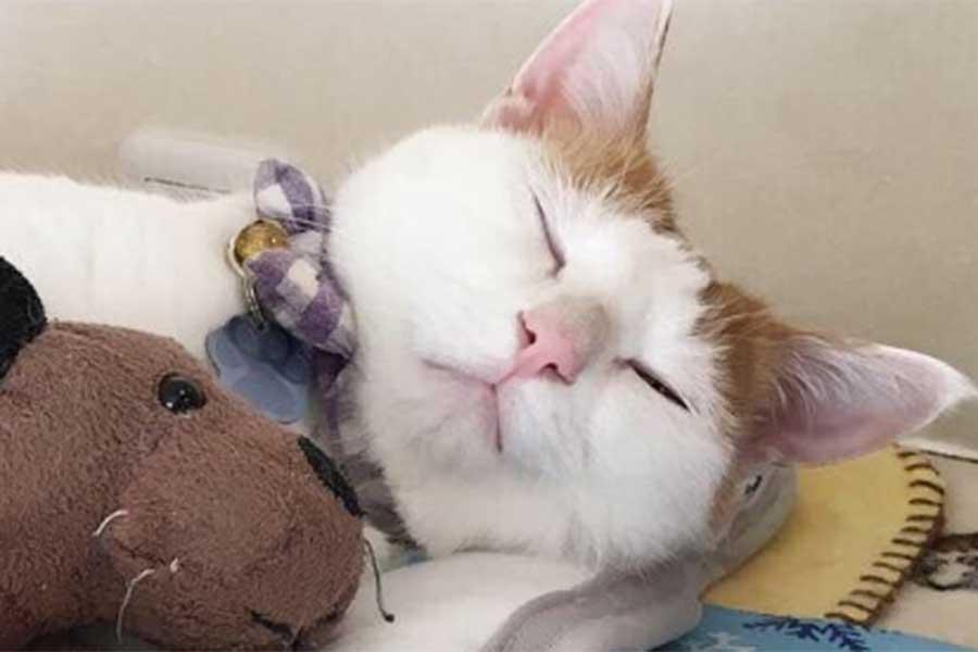 お気に入りのぬいぐるみ「わんわん」と眠るむぎちゃん【写真提供:むぎ(@mugi411)さん】