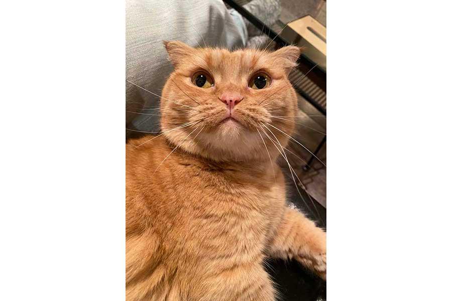 「ポテっポテっ」と転がる姿がかわいいウニちゃん【写真提供:キャットアパートメントコヒー@猫カフェ休業中(@CatApartment)さん】