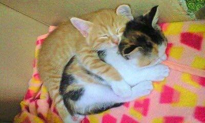 小さい頃から姉の「章」ちゃんを枕にして眠る「隆」くん