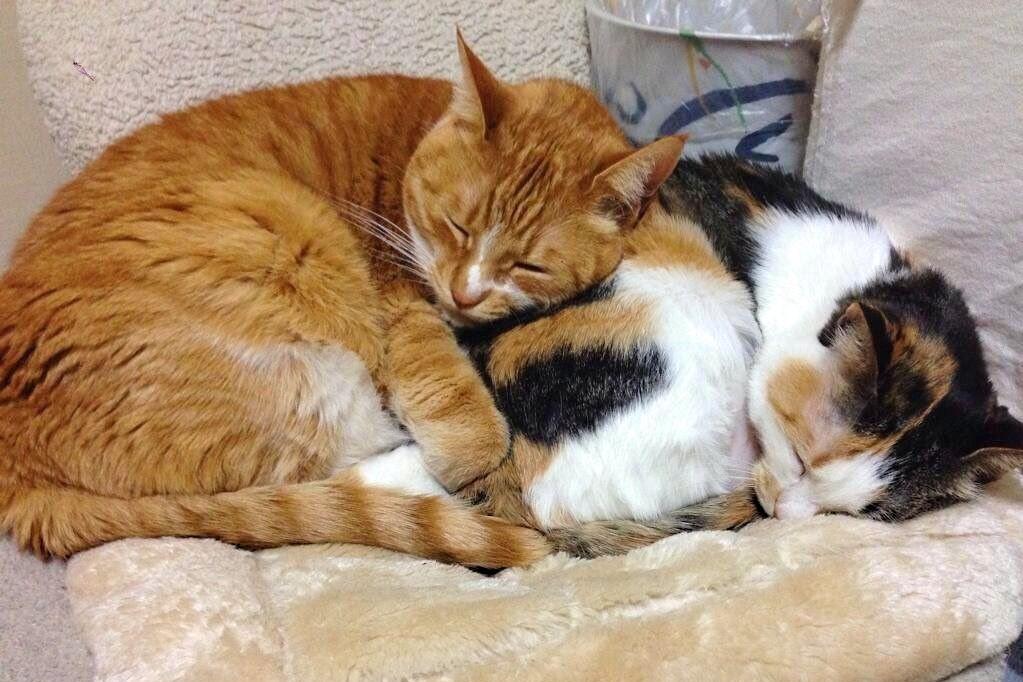 右の三毛猫が「章」ちゃん。寄りかかるように左にいる茶白が「隆」くん【写真提供:夏美(@Natsumi_Cat_222)さん】