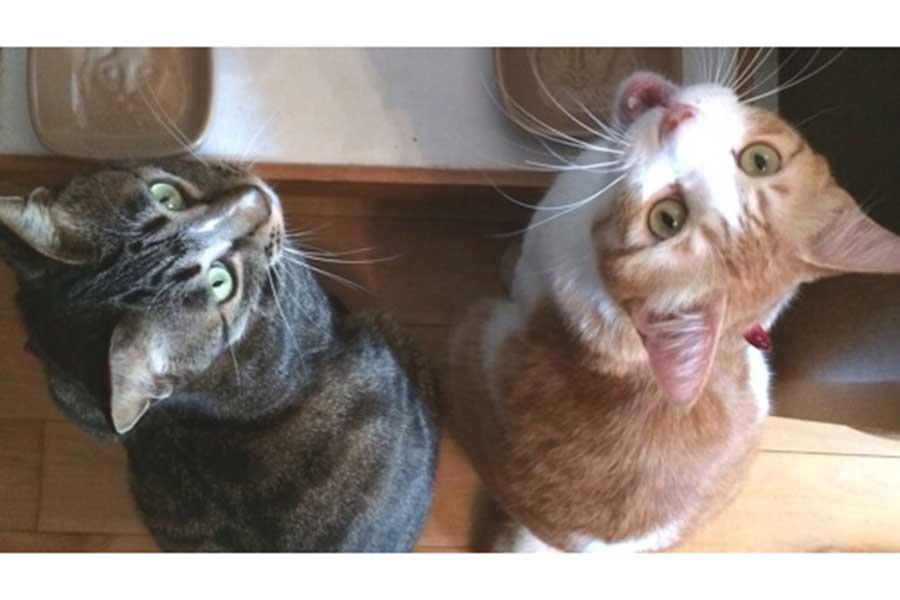 左が兄ねこ「ギタール」くん、右が「シャンソン」くん【写真:猫ねこ部】